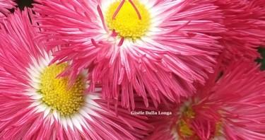 dsc-1326-les-fleurs-photo-2018-de-gisele-dalla-longa.jpg