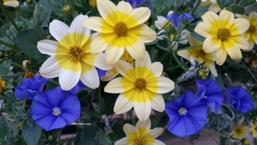 Les fleurs-0732-2017-photo-de-gisele-dalla-longa