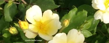 les-fleurs-dsc-0065-photo-2017-de-gisele-dalla-longa.jpg