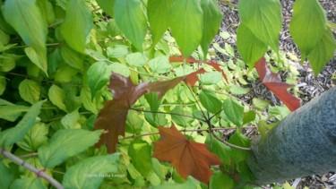 les-feuilles-2-dsc-0300-2017-photo-de-gisele-dalla-longa.jpg